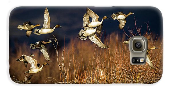 Pintails And Wigeons Galaxy S6 Case