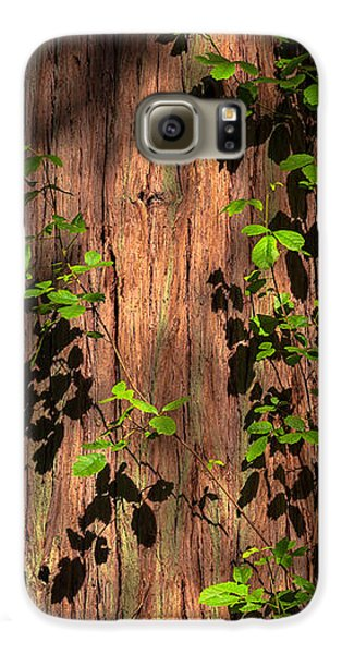 Poison-oak On Incense Cedar Galaxy S6 Case