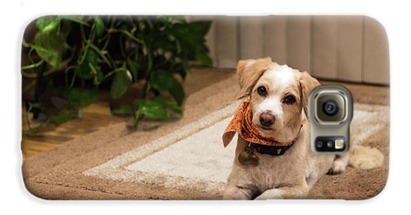 Portrait Of A Dog Galaxy S6 Case