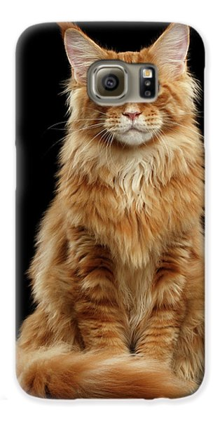 Cat Galaxy S6 Case - Portrait Of Ginger Maine Coon Cat Isolated On Black Background by Sergey Taran