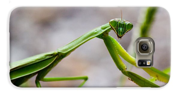 Praying Mantis Looking Galaxy S6 Case