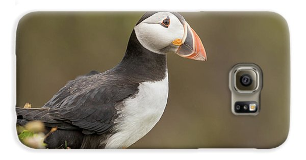 Puffin Galaxy S6 Case - Puffin by Ian Hufton