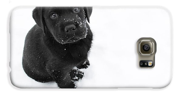 Dog Galaxy S6 Case - Puppy In The Snow by Larry Marshall