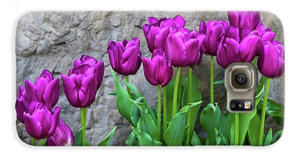 Tulip Galaxy S6 Case - Purple Tulips by Tom Mc Nemar