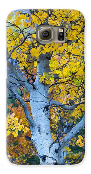 Quaking Aspen Galaxy S6 Case