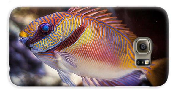 Rabbitfish Galaxy S6 Case