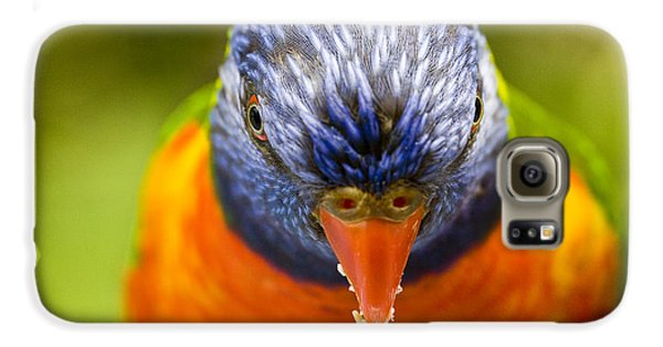 Rainbow Lorikeet Galaxy S6 Case by Avalon Fine Art Photography