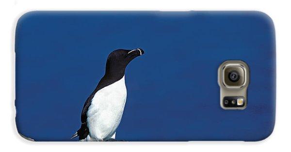 Razor-billed Auk Alca Torda Galaxy S6 Case by Gerard Lacz