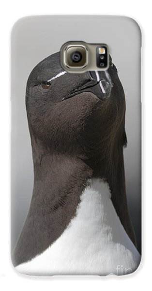 Razorbill Galaxy S6 Case
