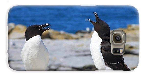 Razorbills Calling On Island Galaxy S6 Case by John Burk