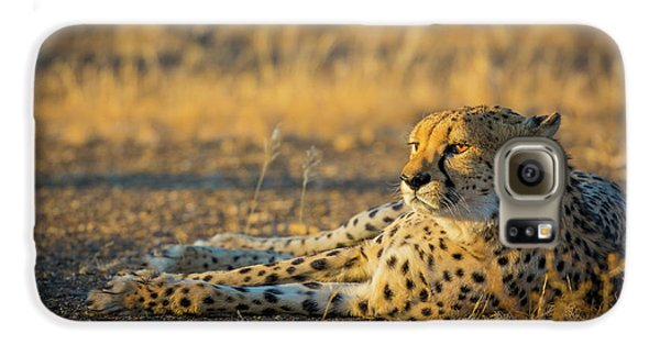 Reclining Cheetah Galaxy S6 Case by Inge Johnsson