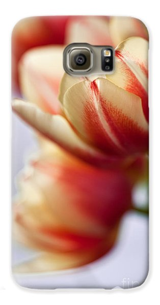 Tulip Galaxy S6 Case - Red And White Tulips by Nailia Schwarz