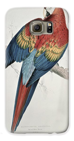 Macaw Galaxy S6 Case - Red And Yellow Macaw  by Edward Lear