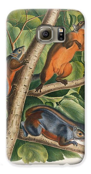 Red Bellied Squirrel  Galaxy S6 Case by John James Audubon