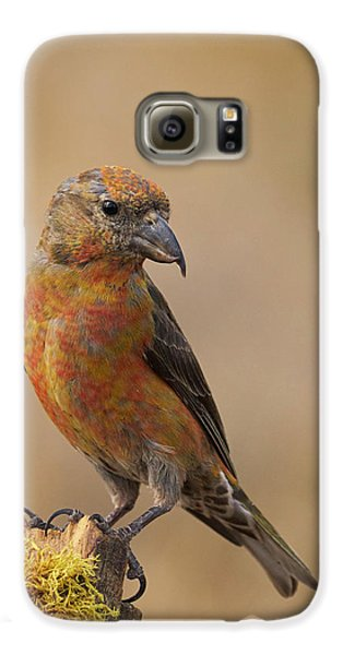 Red Crossbill Galaxy S6 Case