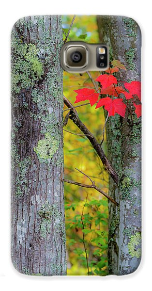 Red Leaves Galaxy S6 Case