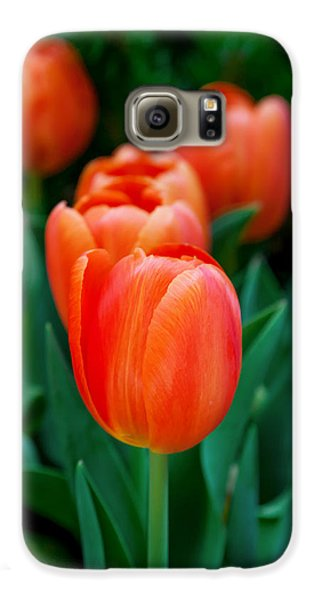 Colours Galaxy S6 Case - Red Tulips by Az Jackson