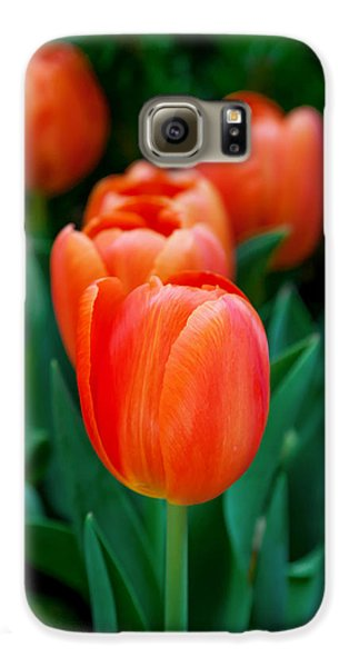 Red Tulips Galaxy S6 Case by Az Jackson