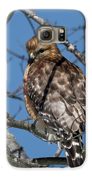 Galaxy S6 Case featuring the photograph Red Shouldered Hawk 2017 by Bill Wakeley