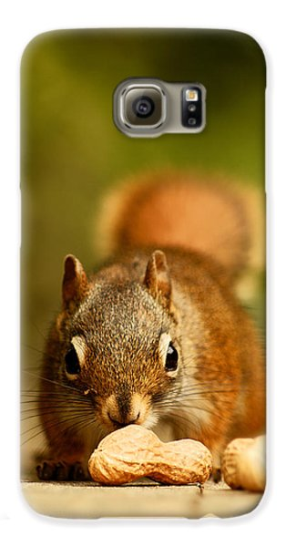 Red Squirrel   Galaxy S6 Case by Cale Best