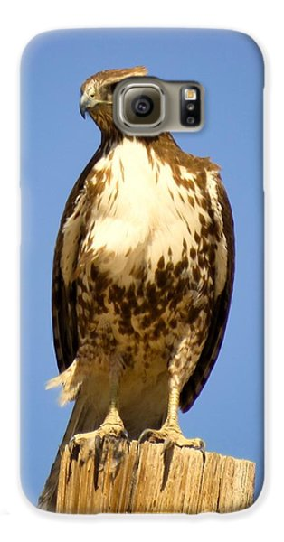 Red-tailed Hawk On Post Galaxy S6 Case