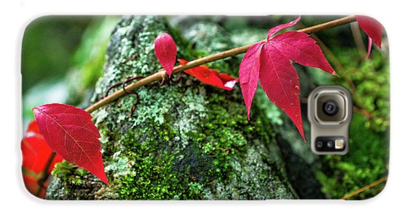 Galaxy S6 Case featuring the photograph Red Vine by Bill Pevlor