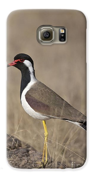 Red-wattled Lapwing Galaxy S6 Case