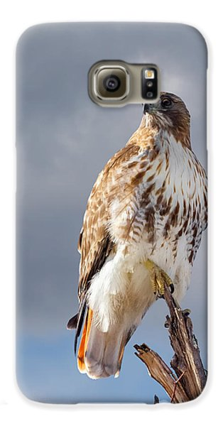 Redtail Portrait Galaxy S6 Case