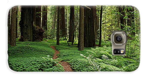 Redwood Forest Path Galaxy S6 Case