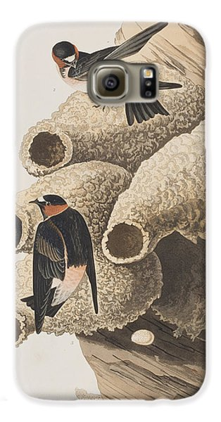 Republican Or Cliff Swallow Galaxy S6 Case by John James Audubon