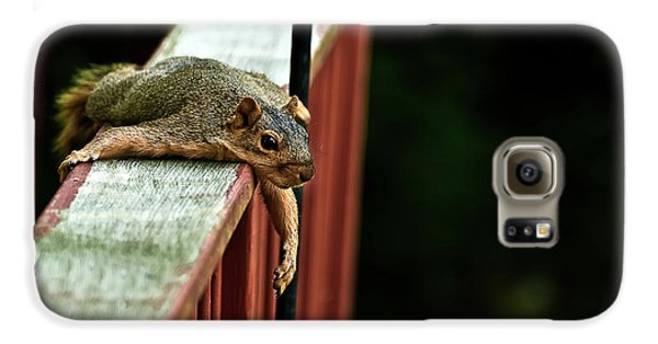 Resting Squirrel Galaxy S6 Case by  Onyonet  Photo Studios