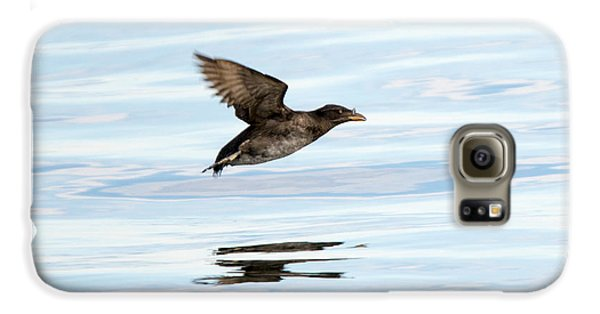 Rhinoceros Auklet Reflection Galaxy S6 Case