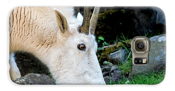 Rocky Mountain Goat Busy Eating Galaxy S6 Case