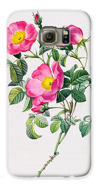 Rose Galaxy S6 Case - Rosa Lumila by Pierre Joseph Redoute
