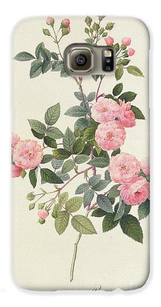 Garden Galaxy S6 Case - Rosa Multiflora Carnea by Pierre Joseph Redoute