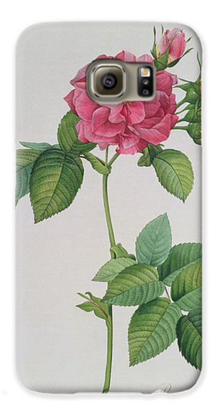 Rose Galaxy S6 Case - Rosa Turbinata by Pierre Joseph Redoute