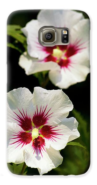 Galaxy S6 Case featuring the photograph Rose Of Sharon by Christina Rollo