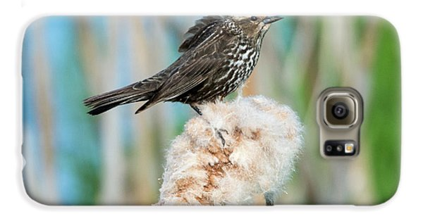 Ruffled Feathers Galaxy S6 Case by Mike Dawson