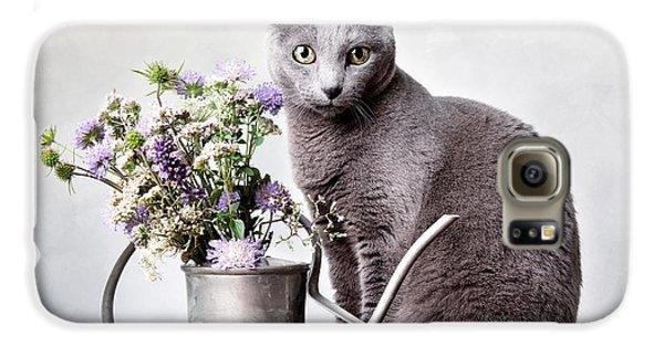 Cat Galaxy S6 Case - Russian Blue 02 by Nailia Schwarz