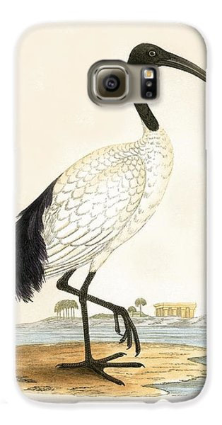 Sacred Ibis Galaxy S6 Case