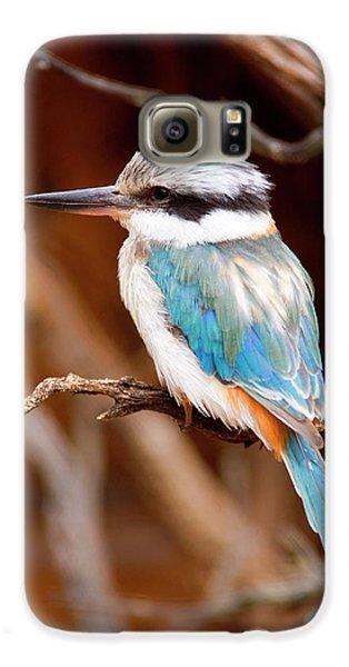 Kingfisher Galaxy S6 Case - Sacred Kingfisher by Mike  Dawson