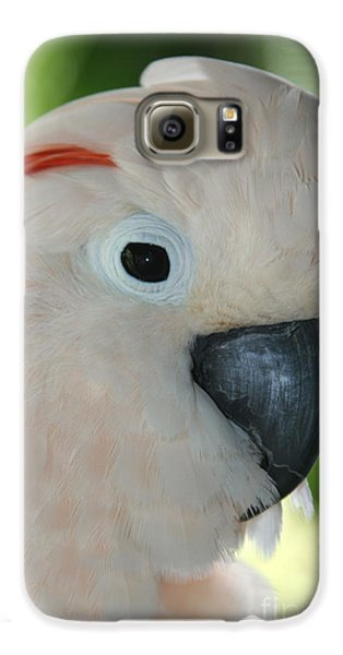 Salmon Crested Moluccan Cockatoo Galaxy S6 Case by Sharon Mau