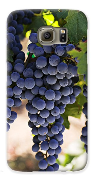 Sauvignon Grapes Galaxy S6 Case by Garry Gay