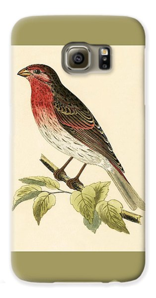 Scarlet Bullfinch Galaxy S6 Case