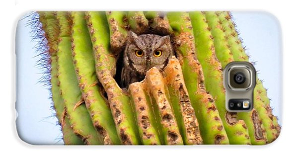 Screech Owl In Saguaro Galaxy S6 Case
