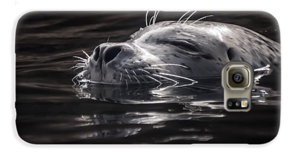 Sea Lion Basking In The Light Galaxy S6 Case