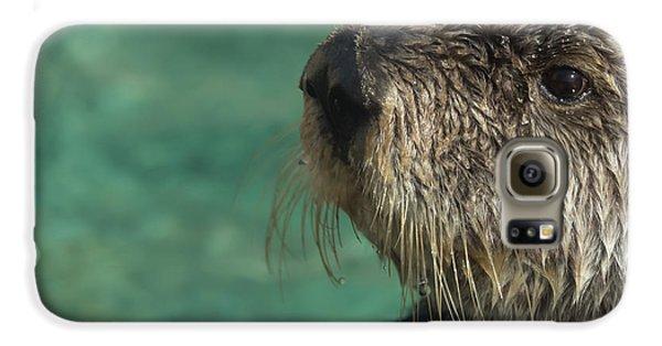 Sea Otter Stare Down Galaxy S6 Case