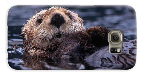 Sea Otter Galaxy S6 Case by Yva Momatiuk and John Eastcott and Photo Researchers