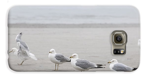 Seagulls On Foggy Beach Galaxy S6 Case by Elena Elisseeva