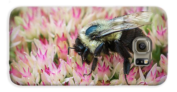 Galaxy S6 Case featuring the photograph Sedum Bumbler by Bill Pevlor